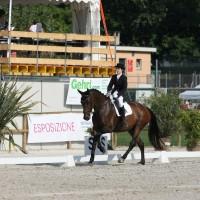 Pferdesport – SM Dressur 2012